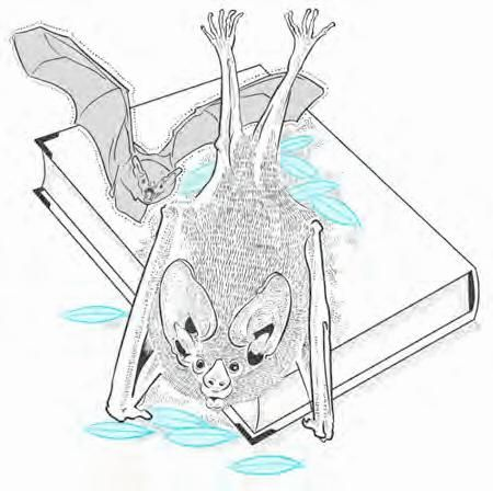 可爱小蝙蝠睡觉简笔画